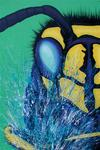 Wespe (100x100cm) , Öl und Acryl auf Leinwand